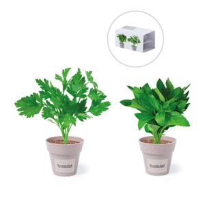 Set de Macetas Biodegradables